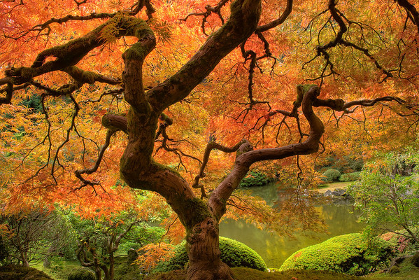 Statue Of Color - Portland Japanese Garden, Oregon